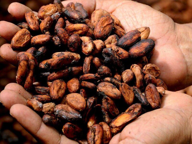 ¿Es bueno el cacao? Beneficios del cacao