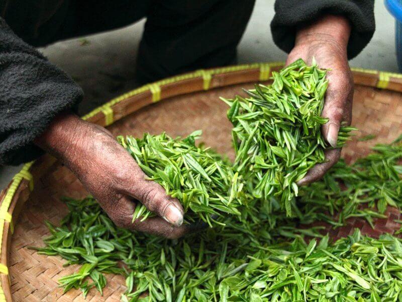 ¿Cuáles son los beneficios del té verde?